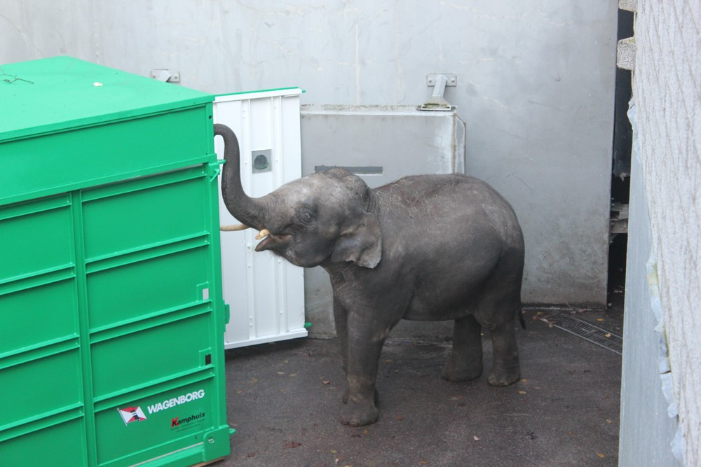 olifant in speciale transportcontainer